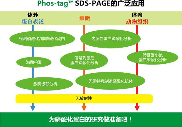 Phos-tag应用