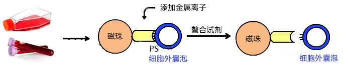 anf[1]-cn.jpg