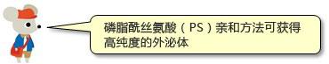 nezumi-1[1]-cn.jpg
